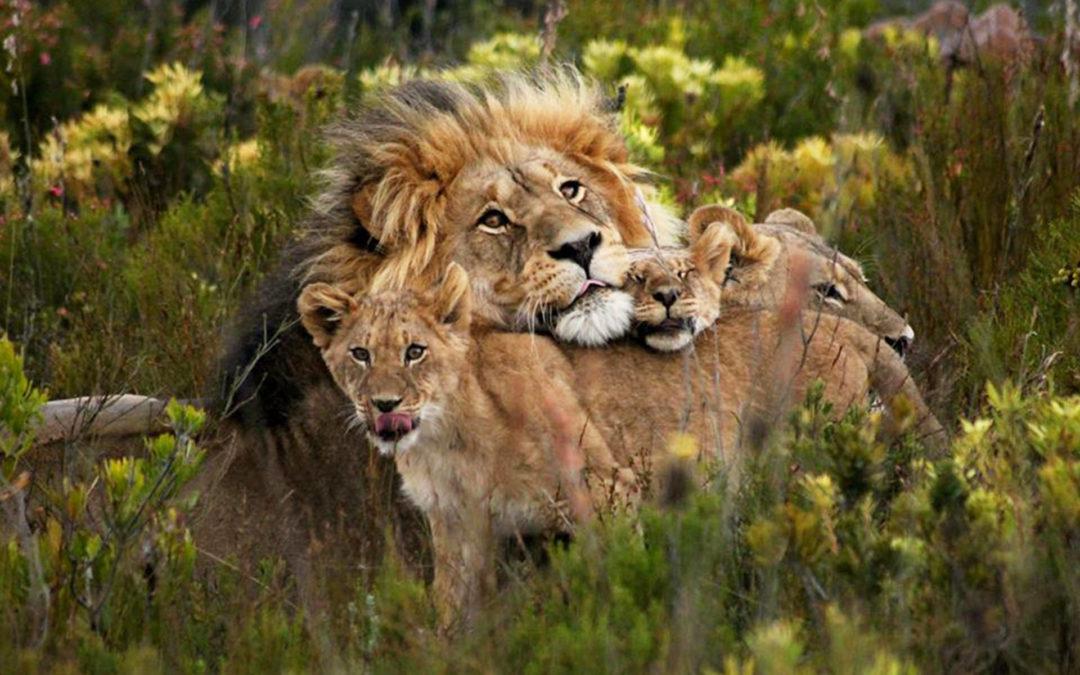 4 Day- The Kruger Big 5 National Park