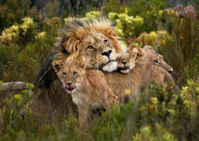 4 Day- The Kruger Big 5 National Park
