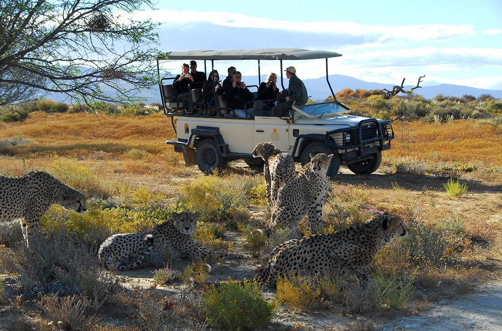 Big 5 Aquila Safari Tour