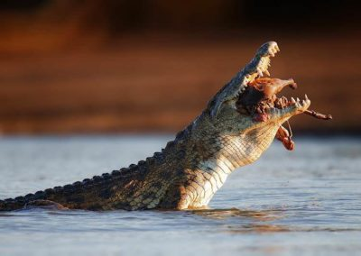 Crocodile Farm Tour- Incl Hotel Pickup
